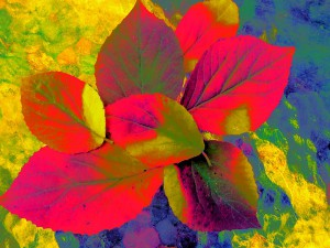 Leaf Fauvism, by Beth Akerman