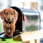 subscribe-to-email-dog